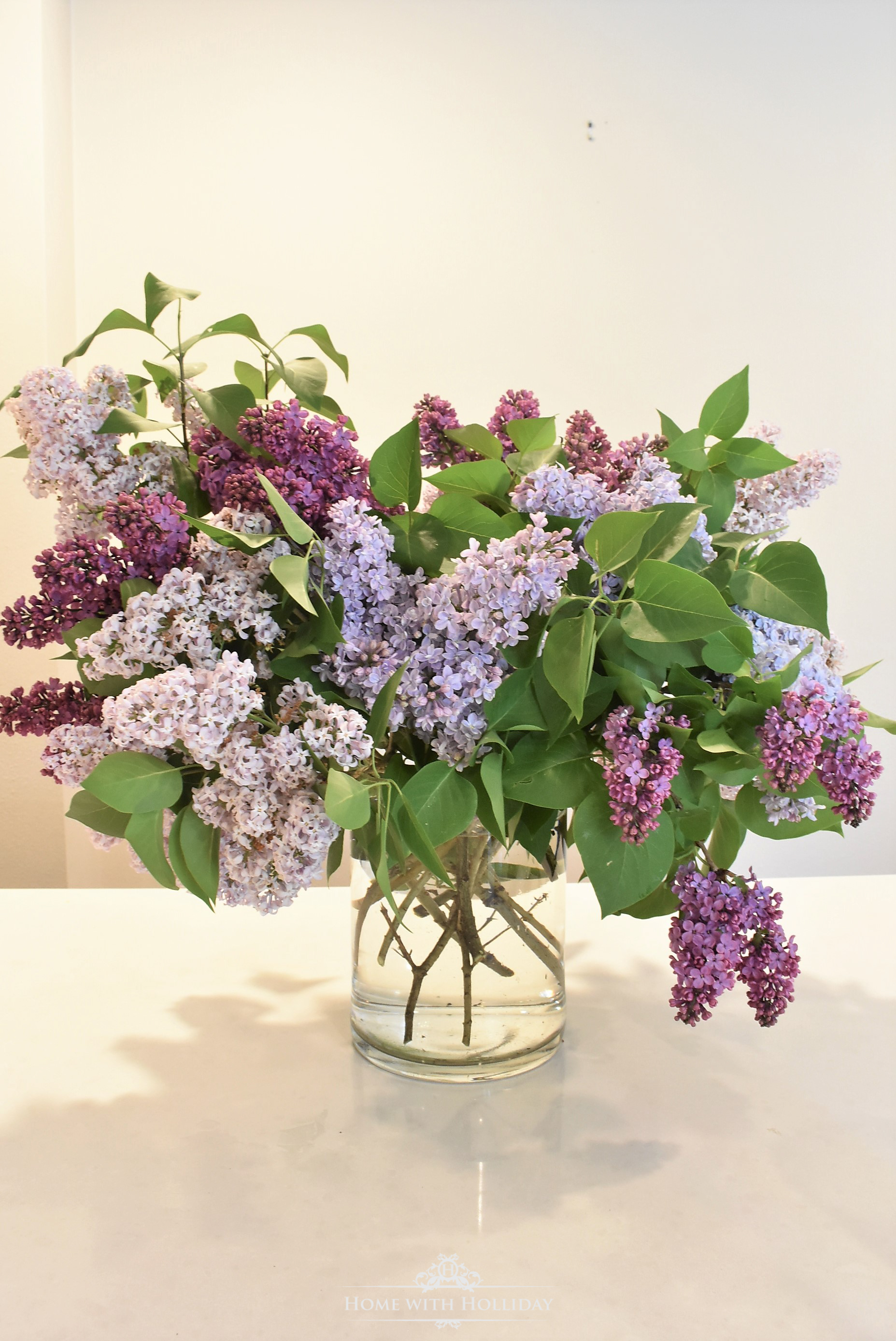 Pruning and Enjoying Lilacs 14