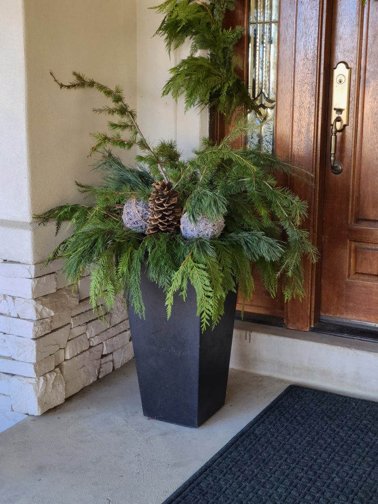 Front Door Pots decorated for Christmas with Fresh Evergreens