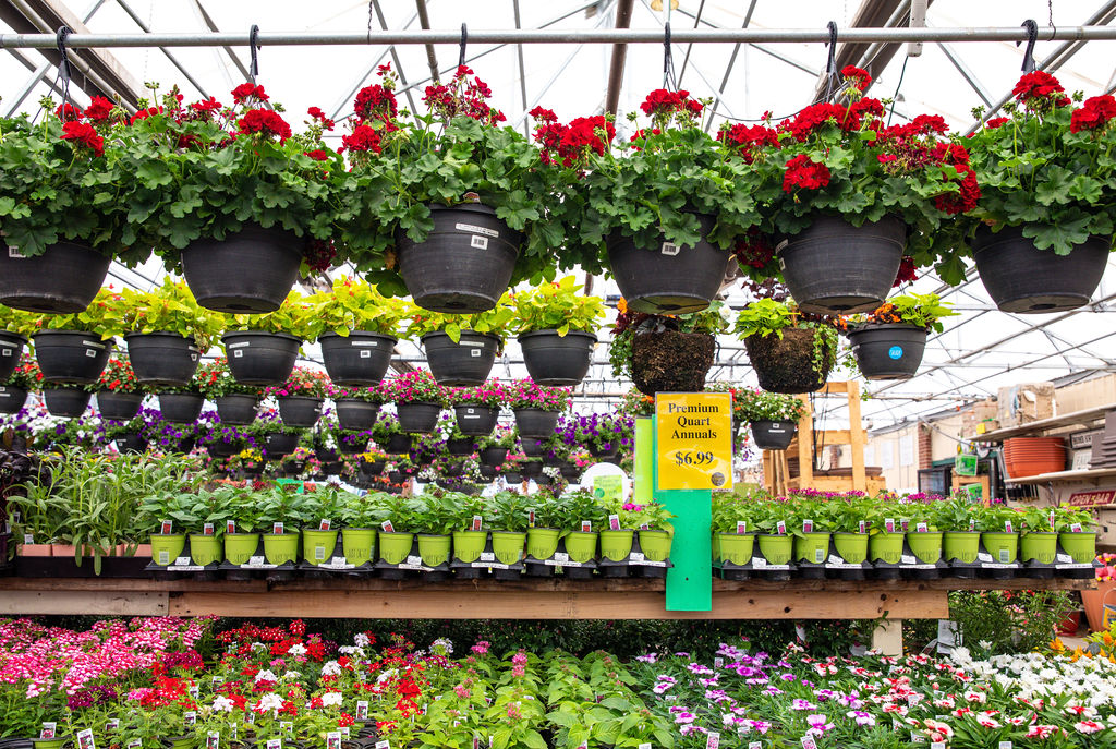A shot of whole bunch of hanging baskets for sale