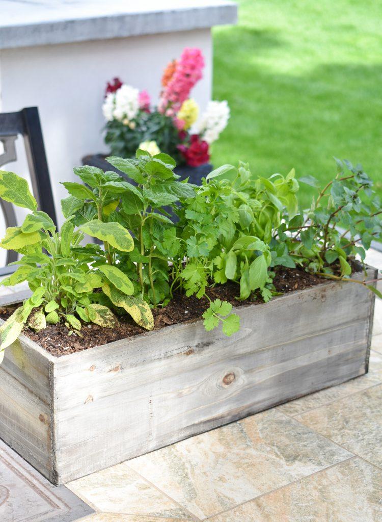 A Simple Herb Garden Centerpiece