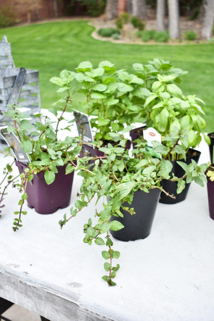 Herbs for Simple Herb Garden Centerpieces
