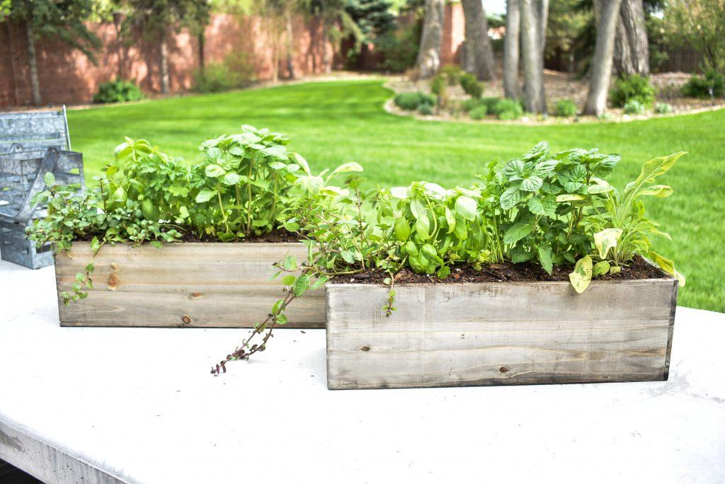 Two Simple Herb Garden Centerpieces