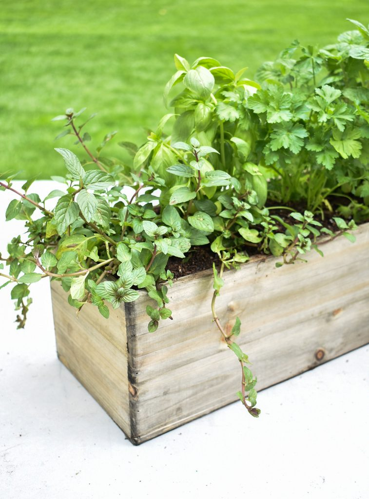 Herbs planted in a wooden box