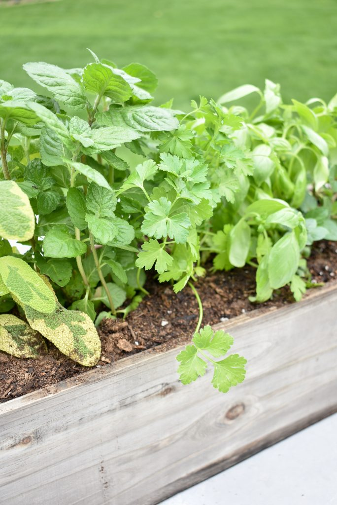 Simple Herb Garden Centerpieces