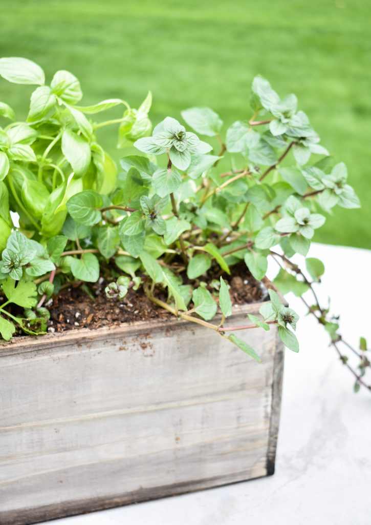 A Simple Herb Garden Centerpiece with mint