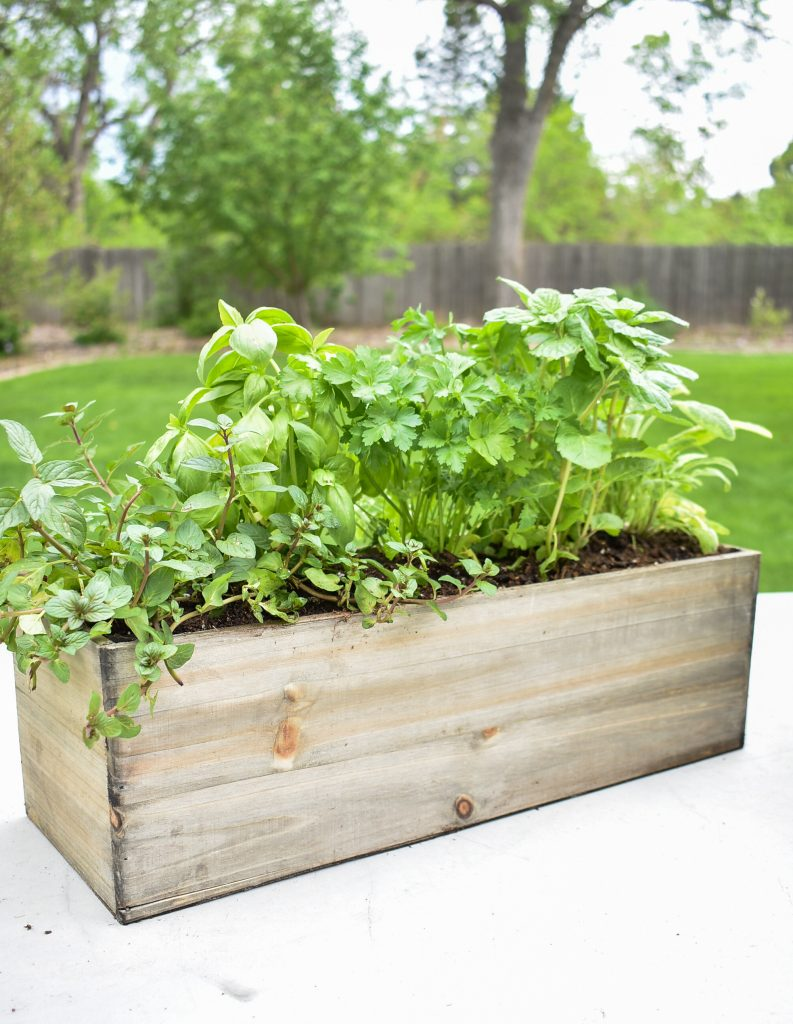 DIY Simple Herb Garden Centerpieces