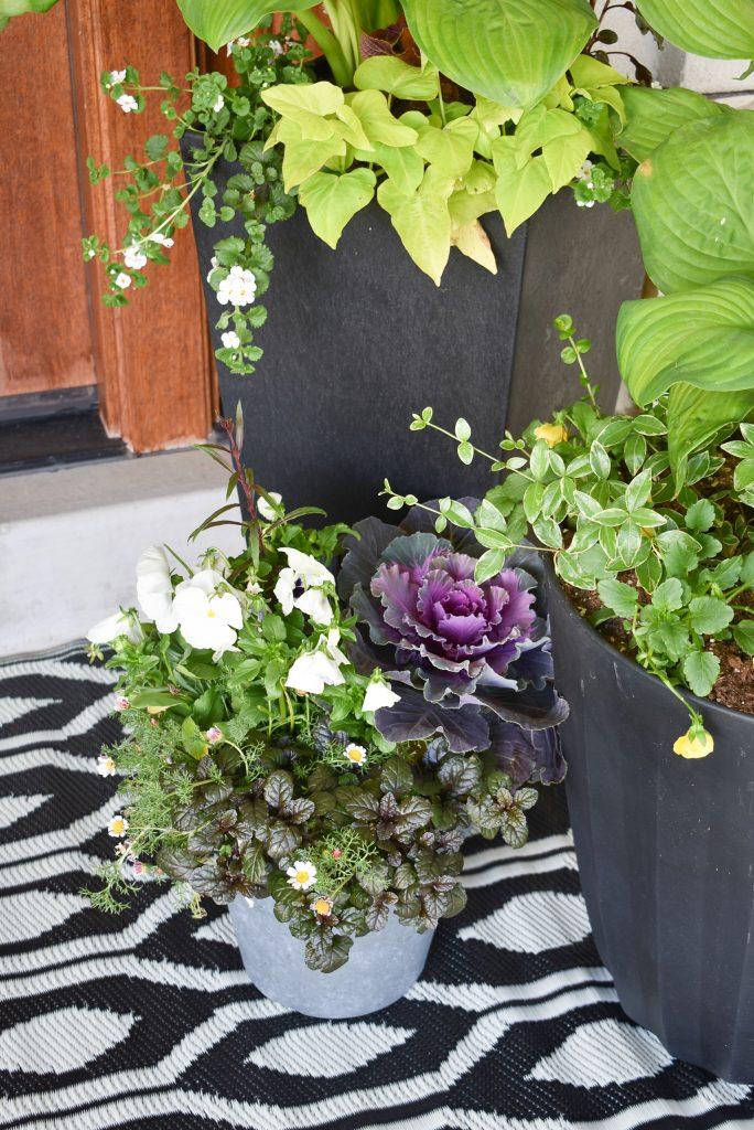 Summer Planter Pot Ideas for Shade