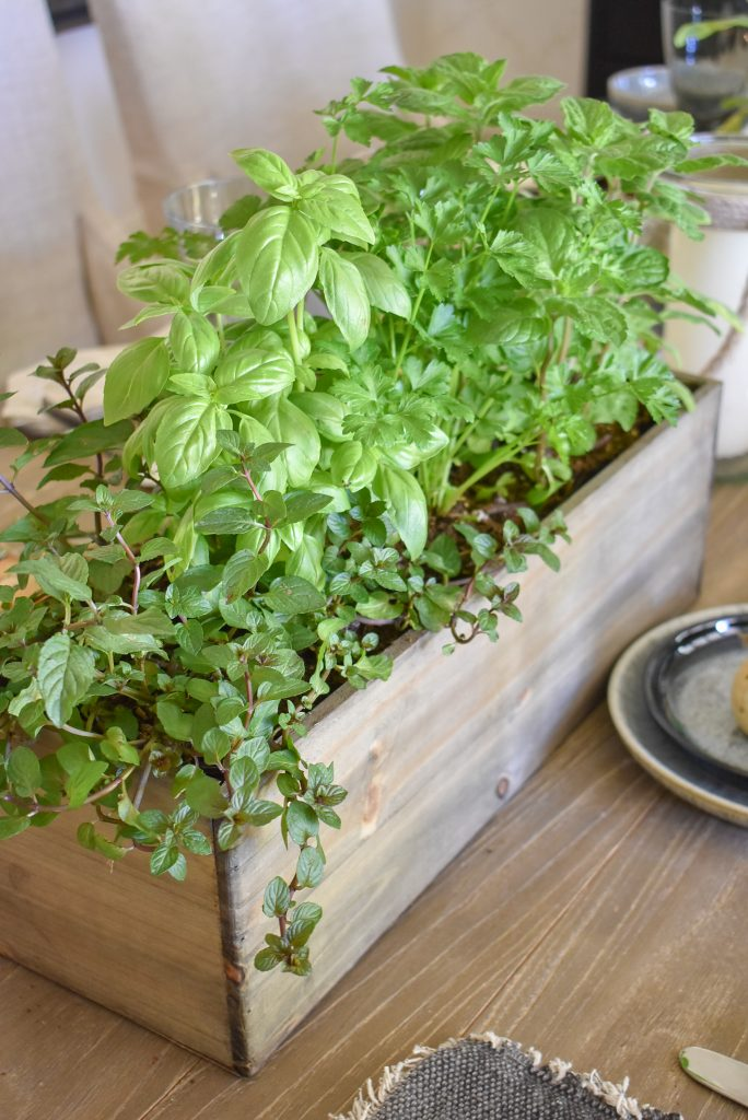 Herb Centerpiece on a Father's Day Table Setting