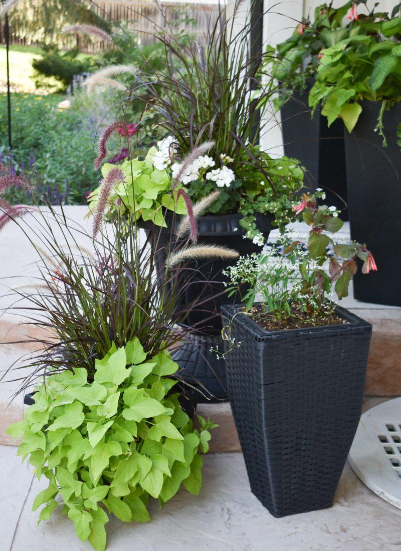 Planter Pots on a Patio Makeover