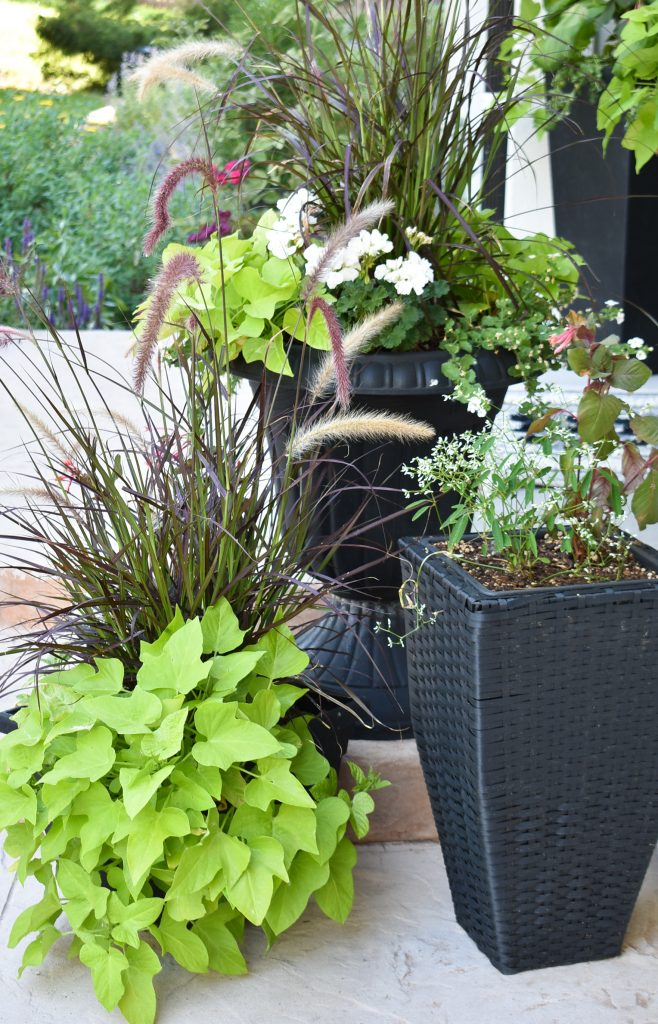 Black planter pots on a back patio reveal