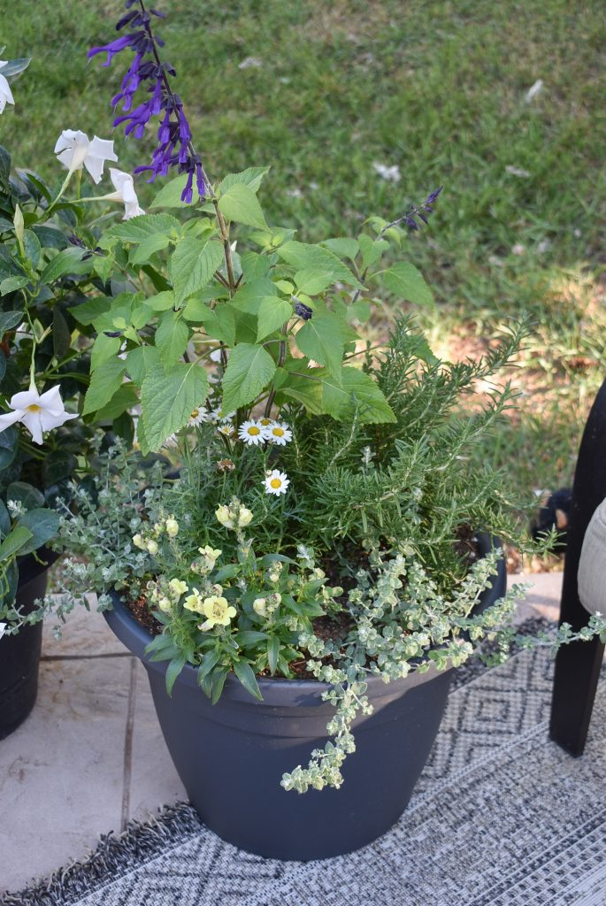 Plants planted in a black pot on a patio