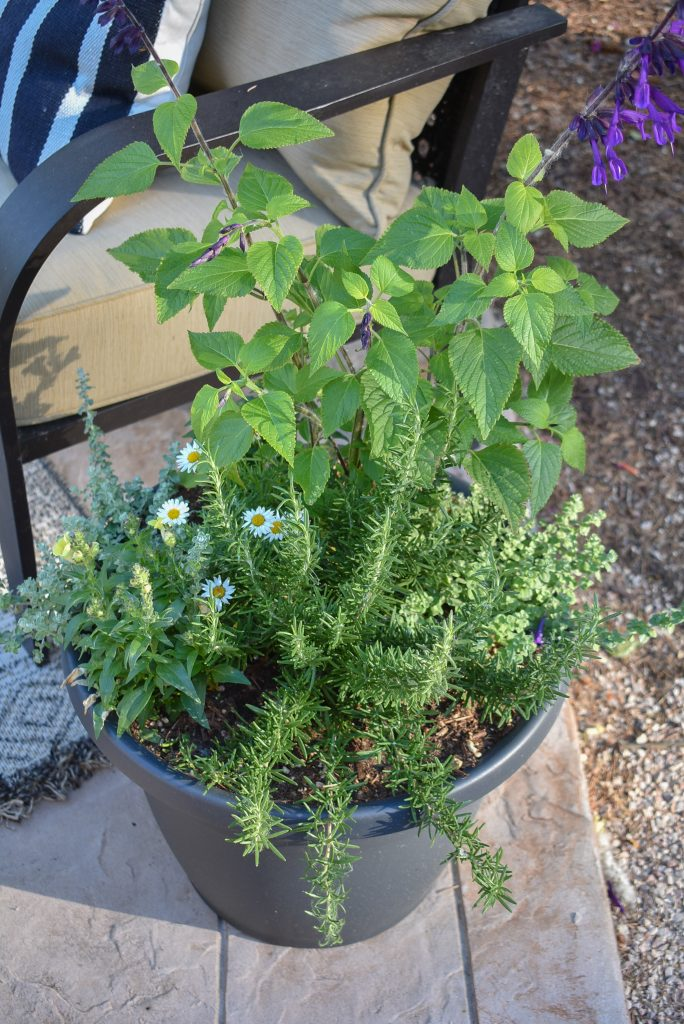 Herbs and plantings in a black planter pot on a patio