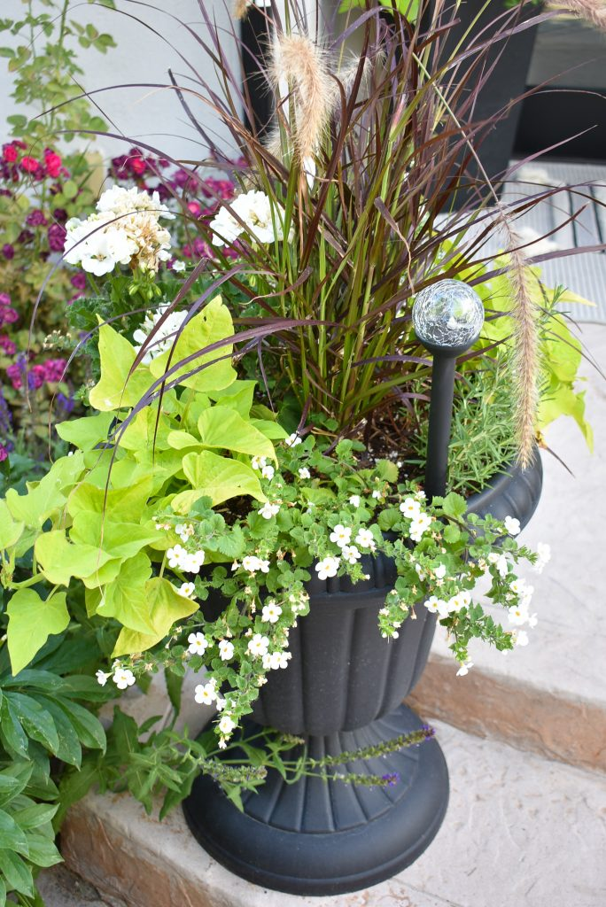 Potted Planter on a back patio reveal