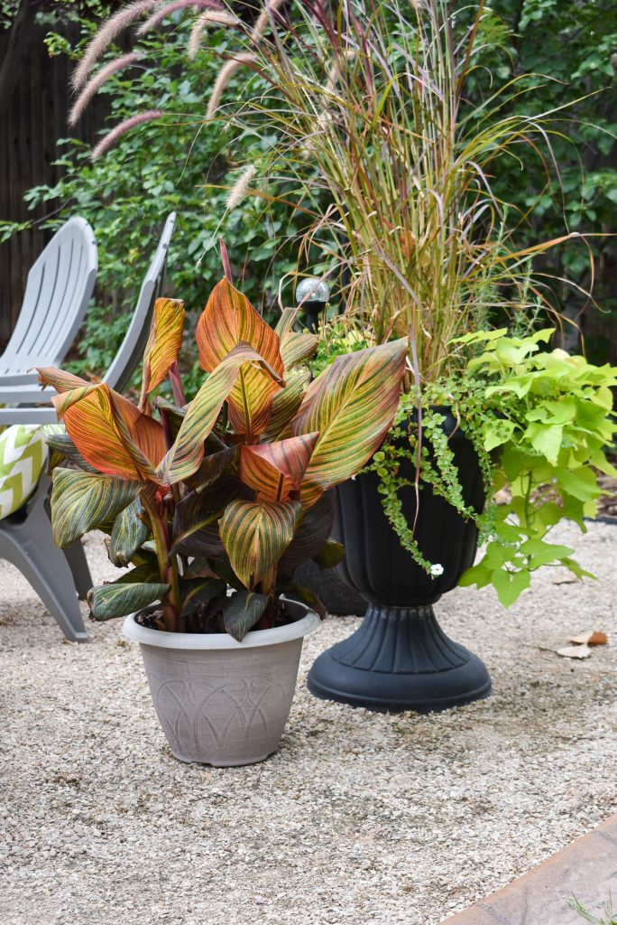 Fall plantings on new cozy firepit area for fall