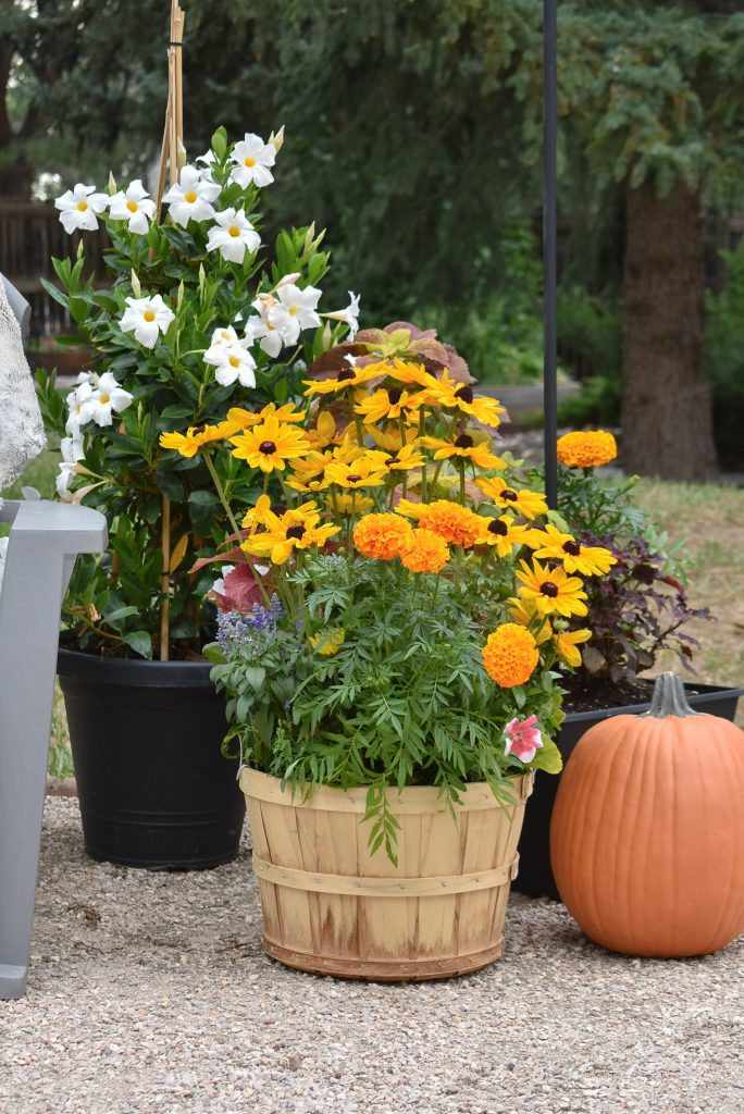 Container Pots on Our New Cozy Firepit Area for Fall