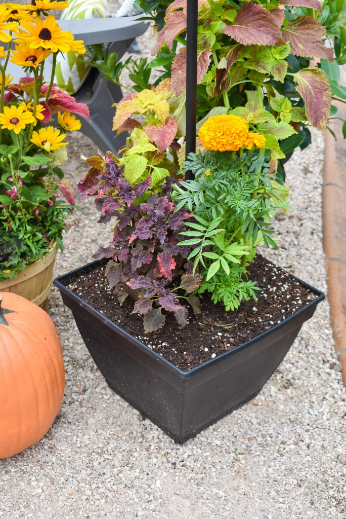 Plantings on Our New Cozy Firepit Area for Fall